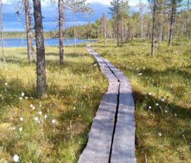 Salamajärvi National Park