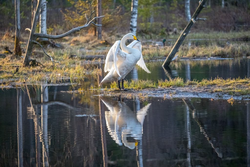 Erä-Eero Wildlife Center