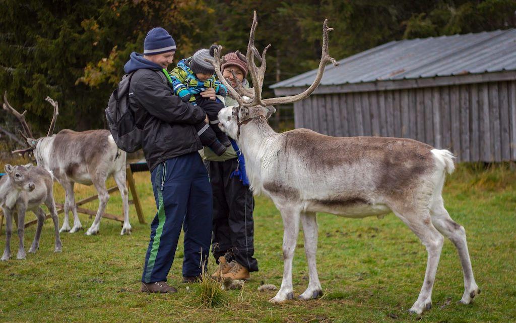 Palosaari reindeer and fishing ranch
